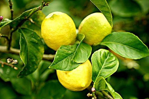 lemons-2825835__340.jpg