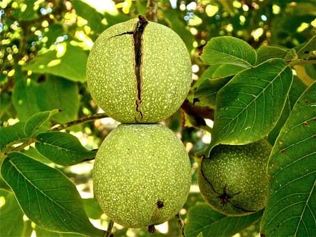 fruit-222042__340.jpg