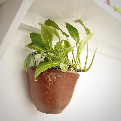 Philodendron inbe