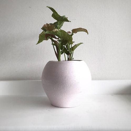 Syngonium podophyllum rosado