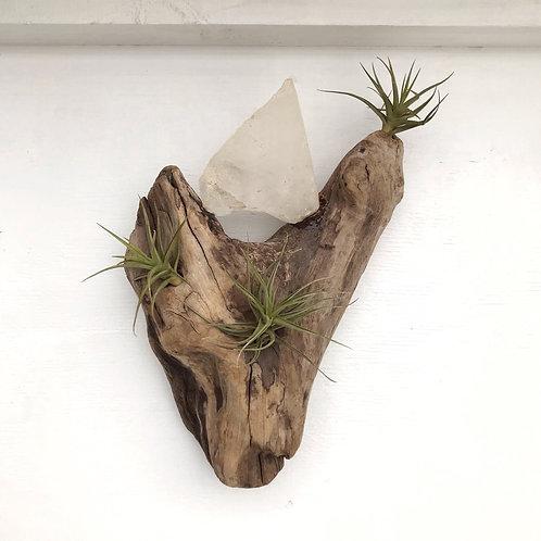 Tillandsias & cuarzo en tronco de madera