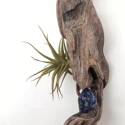 Tillandsia & sodalita en tronco de madera colgante
