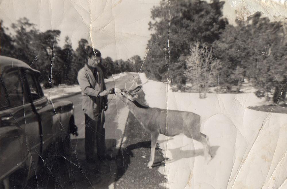 1950 Ford Victoria