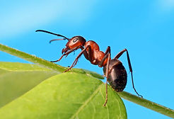 Ant-Facts-and-Information-for-Kids-11070
