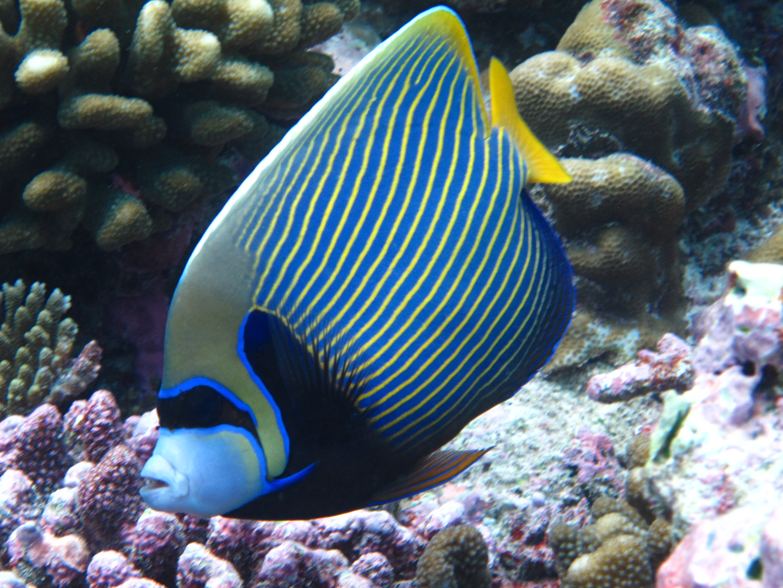 Sugarasúszójú halak