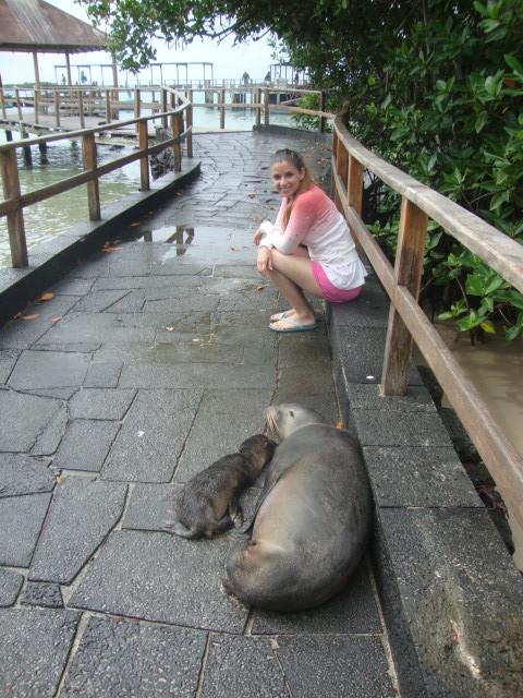 lobos marinos durmiendo en la calle. promover el turismo responsable