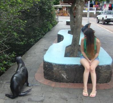 lobo marino y mujer sentada. Foca caminando por la calle, Islas Galápagos, Muelle de los Pescadores, Puerto Ayora,Isla Santa Cruz