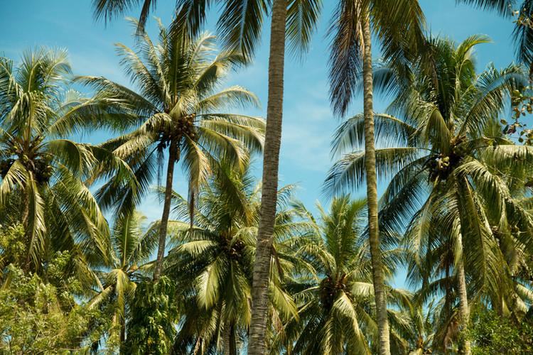 pristine environment fair trade coconut.jpg