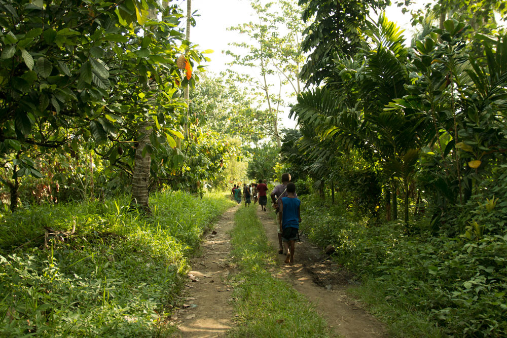 wild harvest organic coconut oil papua new guinea.jpg