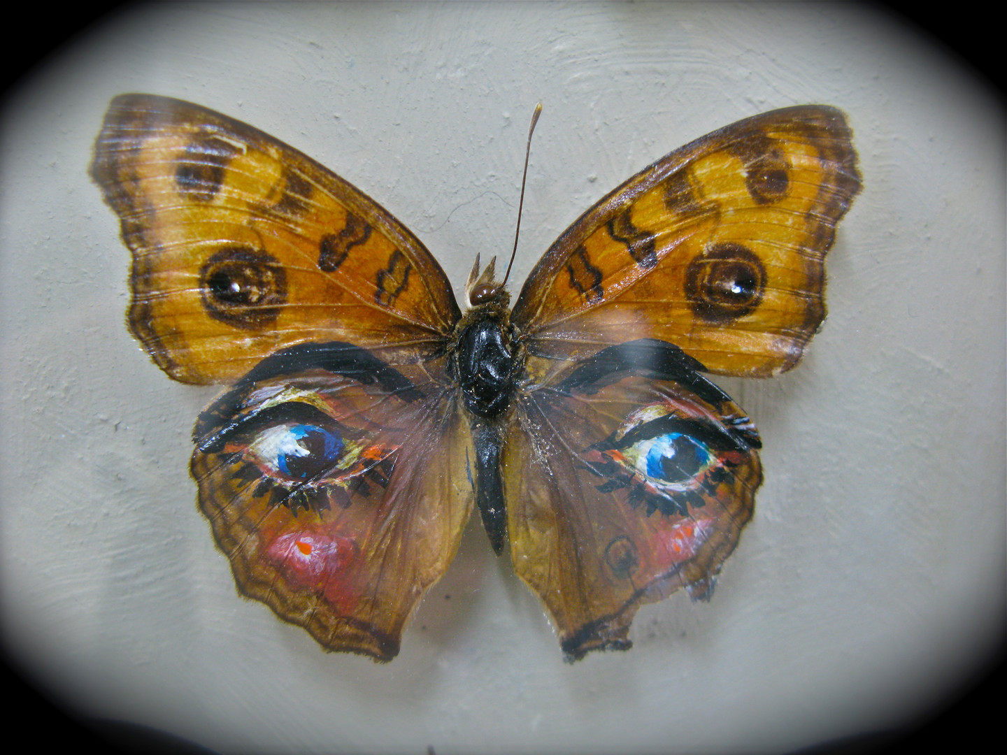Painting on a butterfly