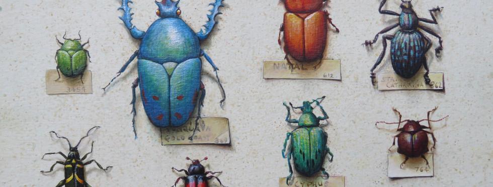 Beetle Specimens