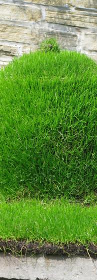 Grass Teapot
