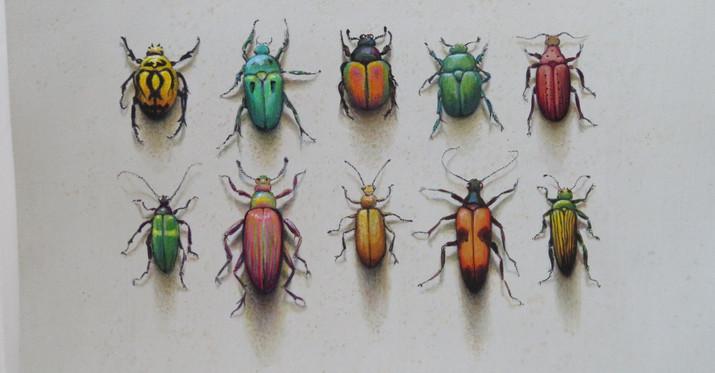 Mixed Beetles