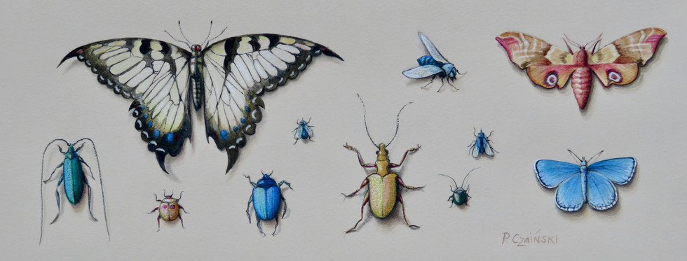 Butterflys and Beetles