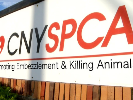 NY Supreme Court Filing Exposes Animal Shelter's Dirty Secrets