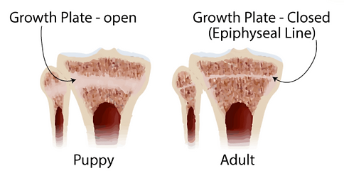 Graphic showing two dog leg growth plate