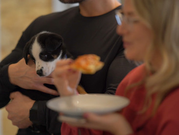 We're bringing Toronto on-demand puppy playdates… and pizza!