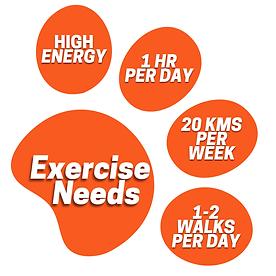 Orange Corgi paw graphic with exercise r