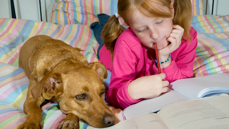 Dog and young girl lying on bed doing homework