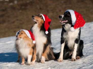 5 Christmas Gift Ideas for Dogs & Dog Lovers