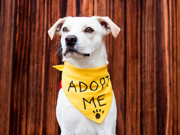 Spot says ADOPT, don't shop for your dog!