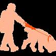 Man walking retriever dog on leash