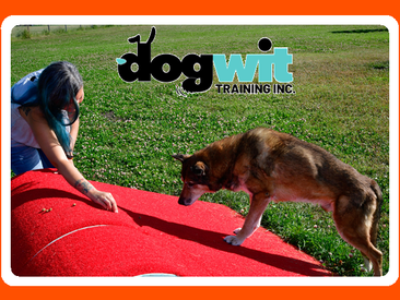 Dog walker training from a certified professional dog trainer 🐾 🐶