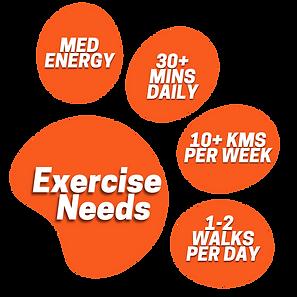 Orange Dachshund paw graphic with exerci