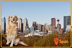 Calgary Dog Parks Home Page Icon
