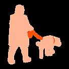 Woman walking retriever on leash