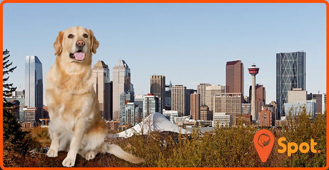 Calgary Dog Parks Featured Article