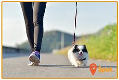 Woman walking small pomeranian puppy dog