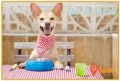 Dog Ingredients Icon