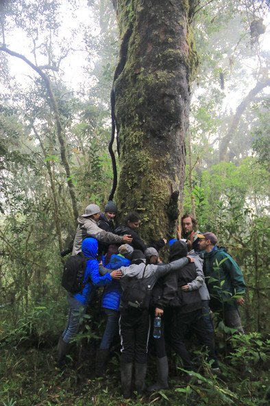 Students from Penn State University hug a Podocarpus tree.