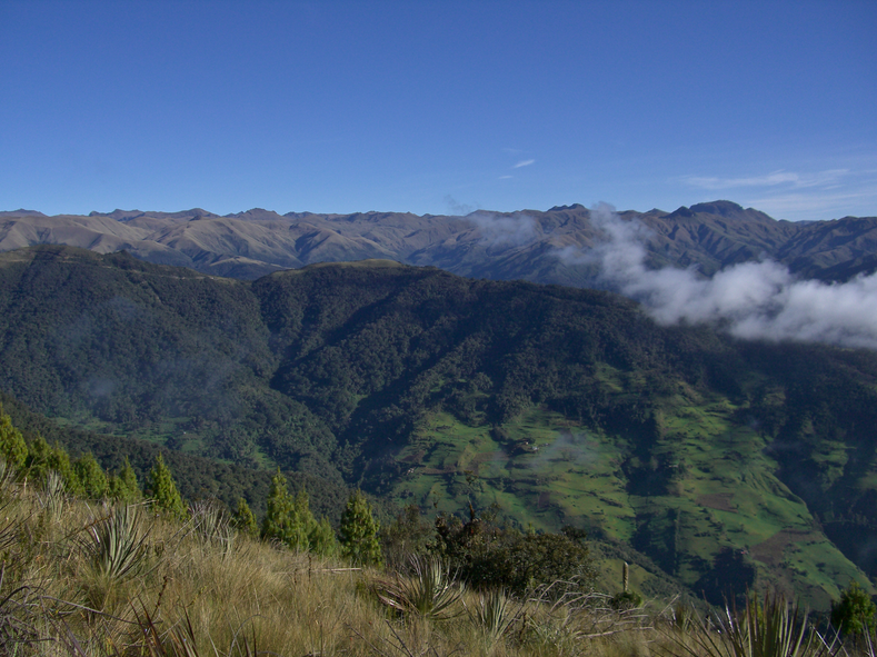 Montane forests in the Nudo del Azuay, with grass paramo at higher elevation.