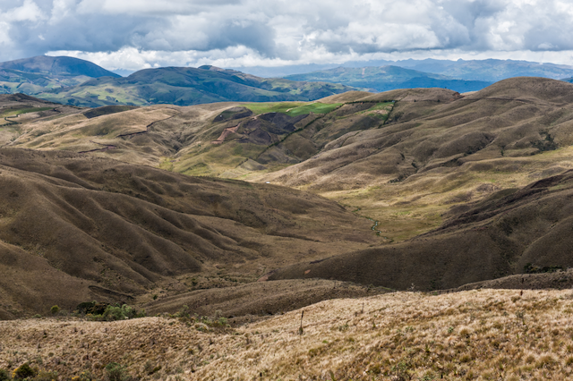 Grass paramo covers extensive areas above tree line in the tropical Andes.