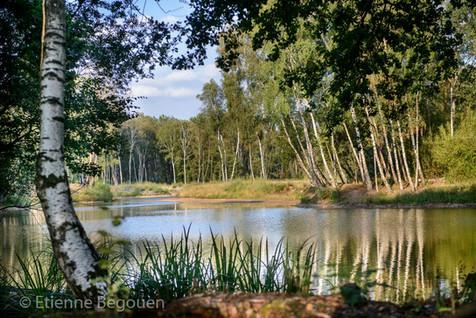 DEP49_BoisettourbieresJarze_©Begouen-41.
