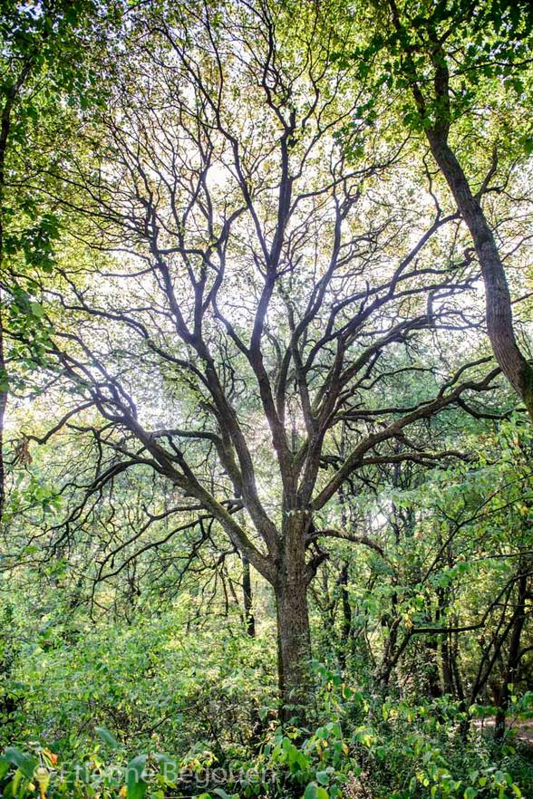 Bois du Fouilloux