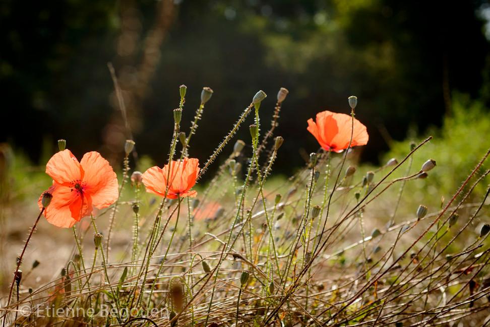 DEP49_plainedesdouces_©Begouen-3.jpg