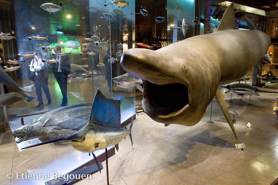 B-Museum d'histoire Naturelle