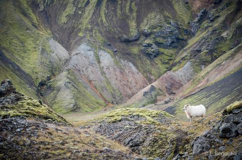 Islande201602.jpg