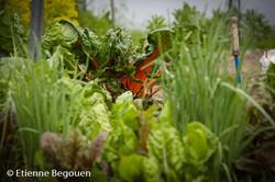 Confidences maitre jardinier (12)