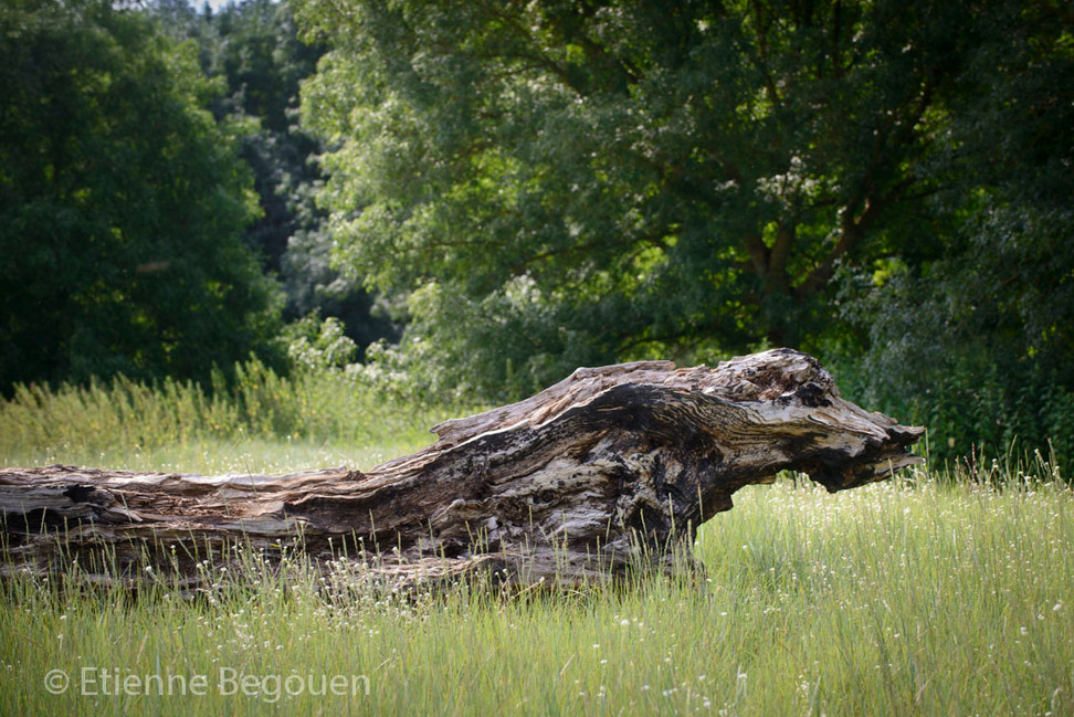DEP49_ValleedelaLoireenamont_©Begouen-65