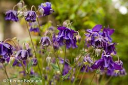 Confidences maitre jardinier (11)