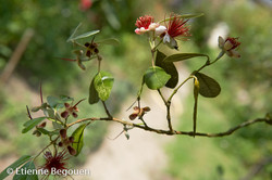 Confidences maitre jardinier (3)