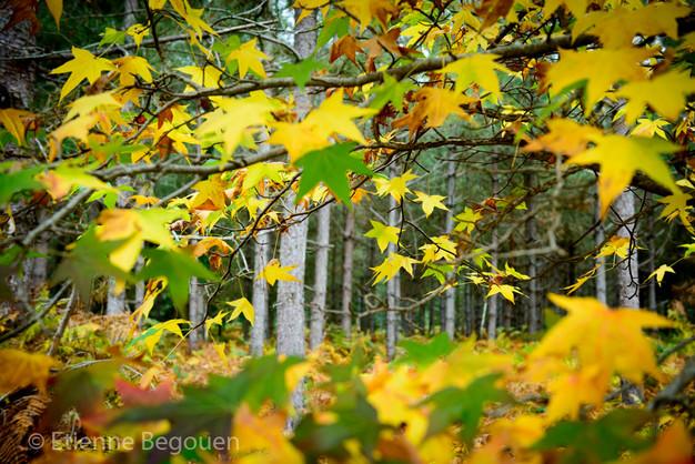 DEP49_ForetdeMonnaie_©Begouen-35.jpg