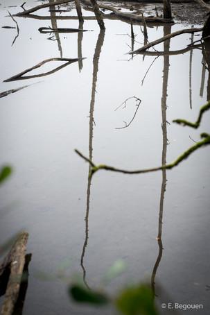 Berges de Maine-11.jpg