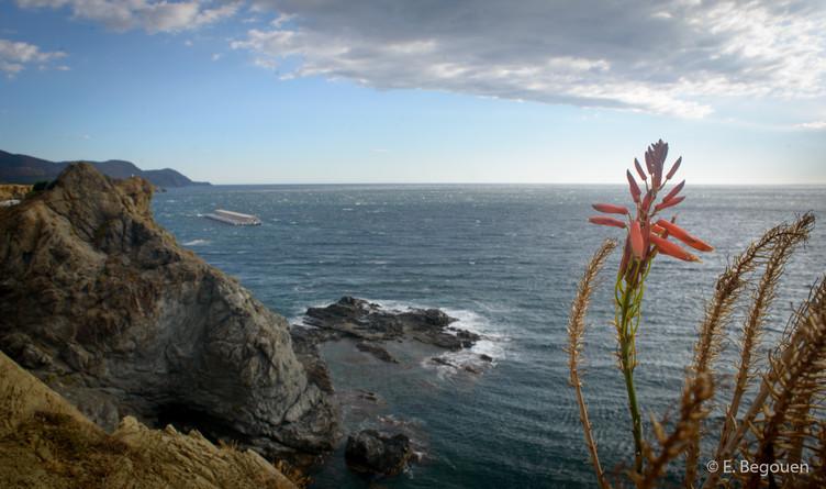 Costa Brava14.jpg
