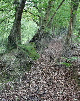 Forest Pale, Ashdown Forest.JPG