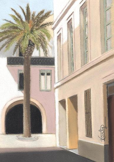 Le palmier nîmois